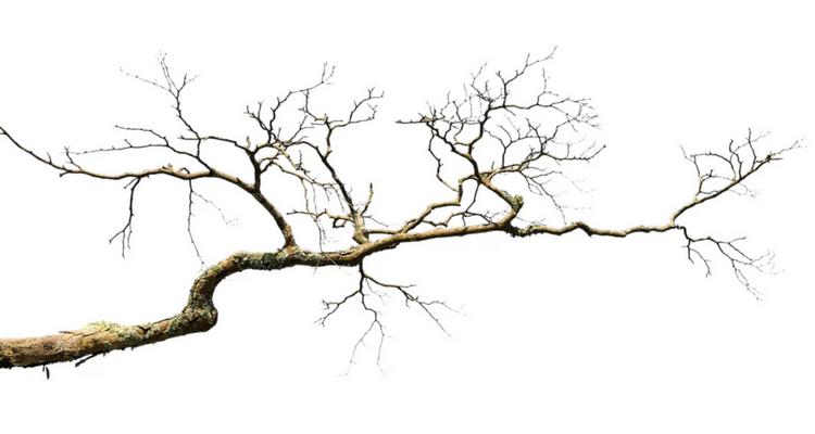 Bodhi Tree Concert - Röntgen Piano Trio