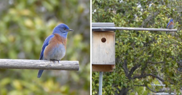 March 29 bluebird